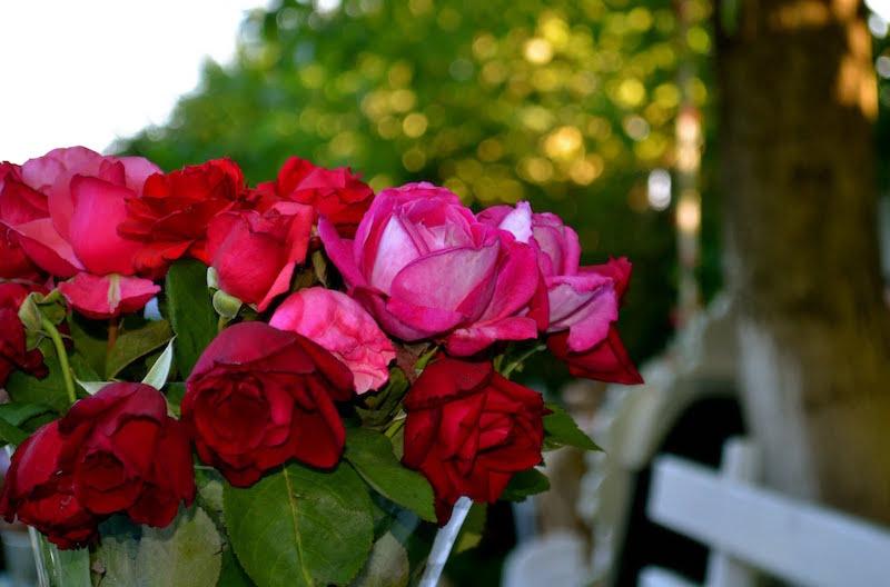 Wine and dine cu Liana Popa / vin rose